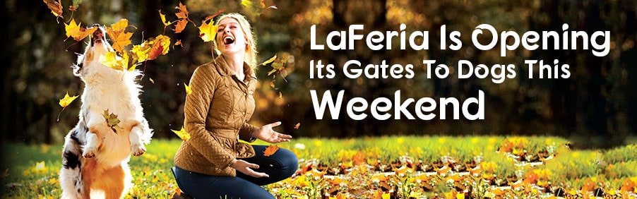 LaFeria Is Opening Its Gates To Dogs This Weekend!