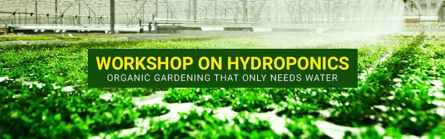 Workshop on Hydroponics – Organic Gardening That Only Needs Water