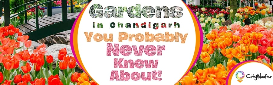 Gardens in Chandigarh You Probably Never Knew About!
